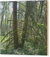 Dsc_0011 Web Wood Print