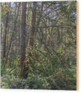 Dsc_0012 Web Wood Print