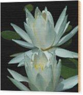 Dual Lilies Wood Print