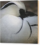 Duck 1 Wood Print