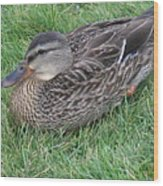 Duck 2 Wood Print