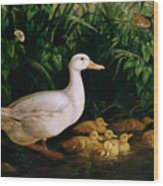 Duck And Ducklings Wood Print by English School