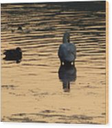 Duck And Swan At Sunrise Wood Print
