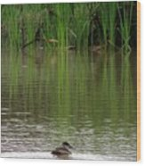 Duck Blinds Wood Print