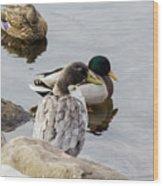 Duck, Duck Wood Print