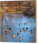 Duck Duck Goose Goose Wood Print