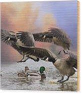 Duck Ducks 2 Wood Print