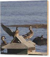 Duck Flyby Wood Print