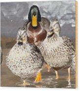 Duck - Id 16235-220255-9105 Wood Print