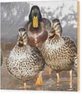 Duck - Id 16235-220402-2840 Wood Print
