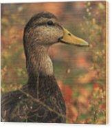 Duck In Autumn Wood Print