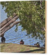 Duck Into The Shade Wood Print