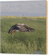 Duck Landing Wood Print