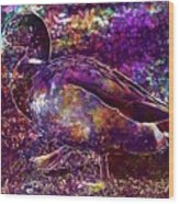 Duck Mallard Anatidae Duck Bird  Wood Print