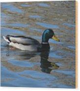 Duck Mallard Duck Wood Print by Hasani Blue