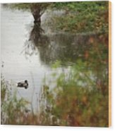 Duck On A Pond Wood Print