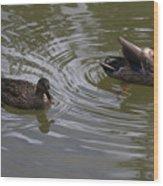 Duck Pair Wood Print