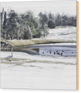 Broadmoor Winter Swim Wood Print
