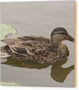 Duck Reflecting Wood Print
