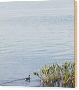 Duck Swimming In Lake Wood Print