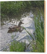 Duck Swimming In Stream Wood Print