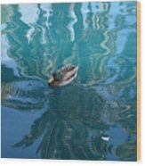 Duck Swimming In The Blue Lagoon Wood Print