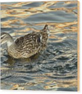 Duck Tracy Wood Print