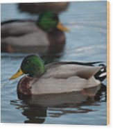 Duck Trio Wood Print