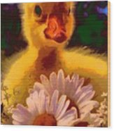 Fuzzy Duckling And Daisies Wood Print