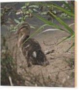 Duckling Lost Wood Print