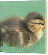 Duckling Close Up Wood Print