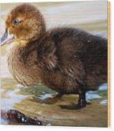 Duckling In Water Wood Print