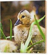 Duckling Wood Print