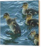 Ducklings Wood Print