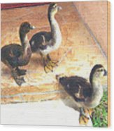 Ducklings Come To Visit Wood Print