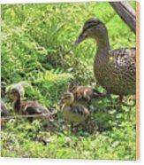 Ducklings Through The Ferns Wood Print