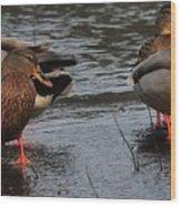 Ducks Hoping For Snacks  Wood Print