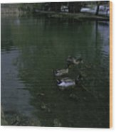 Ducks In A Pond Wood Print