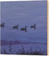 Ducks In A Row - Swimming In The Clouds Wood Print