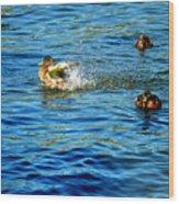 Ducks In Water Wood Print