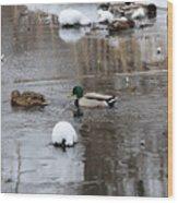 Ducks In Winter Wood Print