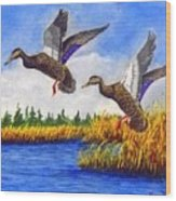 Ducks Landing In A Marsh Wood Print