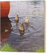 Ducks Mooning Wood Print