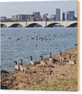 Ducks Of The Potomac Wood Print