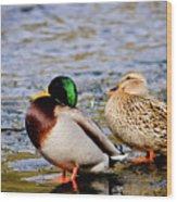 Ducks On Ice Wood Print