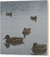 Ducks On Lake Bled Wood Print