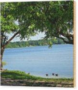 Ducks On Lake Edge Wood Print