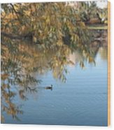 Ducks On Peaceful Autumn Pond Wood Print