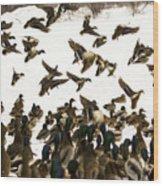 Ducks On The Move Wood Print