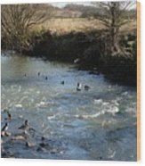 Ducks On The River In Early Spring Wood Print